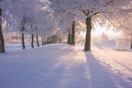 pej gruppens udeområder om vinteren